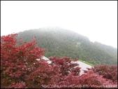 『 宜蘭大同。太平山 』夏楓與碰碰車的邂逅:IMG_7001.JPG