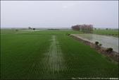 『竹塘。竹塘木棉花道 』季節限定。彰化三大木棉花道之一: