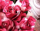 美呆了!!:復古玫瑰.jpg
