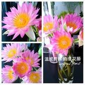 美呆了!!:香水蓮花.jpg