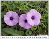 心情日記:PICT7866.jpg