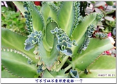 心情日記:IMG_6165-01.jpg