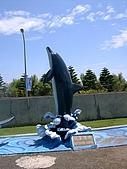 澎湖之旅─海生館:0007有名的海豚