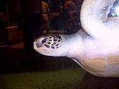 澎湖之旅─海生館:0012真的大烏龜
