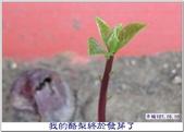 心情日記:IMG_7048.jpg
