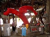 澎湖之旅─通樑古榕樹:0011小乖要跟祂拍照