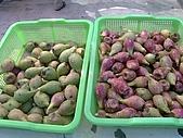 澎湖之旅─通樑古榕樹:0020野生果子價錢還不