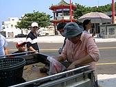 澎湖之旅─通樑古榕樹:0030原來當地人是這樣