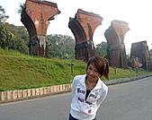 20101121苗栗銅鑼杭菊、龍藤斷橋外拍: