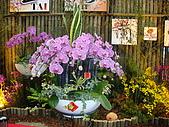 花卉圖片:DSC01115.JPG