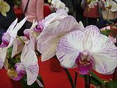 花卉圖片:DSC01117.JPG