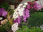花卉圖片:DSC01118.JPG