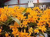 花卉圖片:DSC01120.JPG