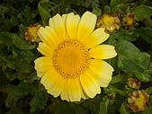 漂亮的花朵:花卉01