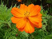 漂亮的花朵:花卉02