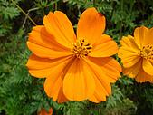 漂亮的花朵:花卉03