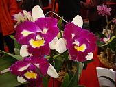 花卉圖片:DSC01122.JPG