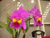 花卉圖片:DSC01125.JPG