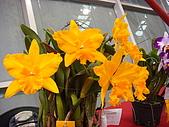 花卉圖片:DSC01126.JPG