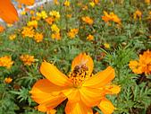 漂亮的花朵:花卉和蜜蜂