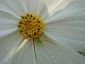 漂亮的花朵:花卉05