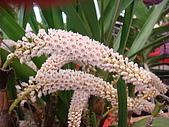 花卉圖片:DSC01132.JPG