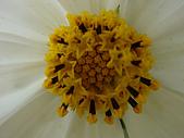 漂亮的花朵:花卉06