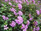 花卉圖片:DSC01108.JPG