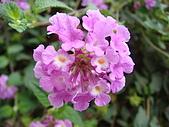 花卉圖片:DSC01109.JPG
