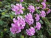 花卉圖片:DSC01110.JPG
