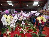 花卉圖片:DSC01114.JPG