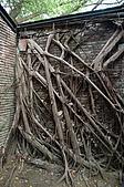 20080223台南安平行與古都路跑:安平樹屋