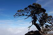 20081224南湖大山:逆境中總顯驚豔