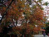 福壽山.武陵農場二日遊(11/23~24 09'):09'Nov23-24福壽山+武陵之旅 039.jpg