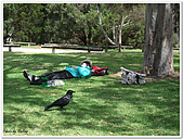 Perth Days:Tammy和蠢蠢欲動的小鳥